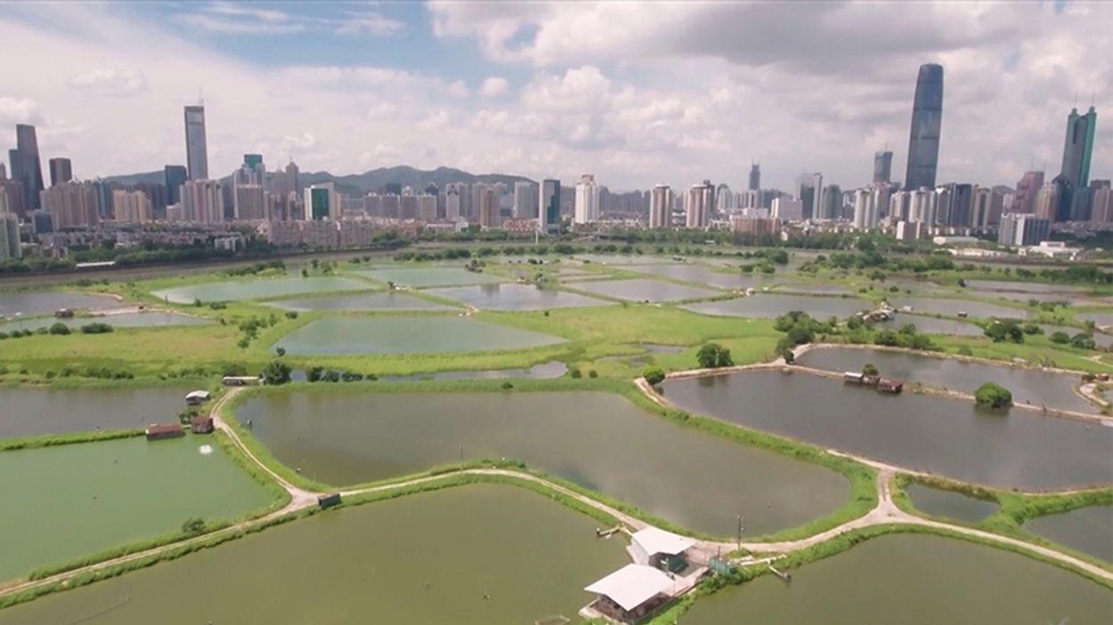 Afbeelding van Web Draait Door: China van boven
