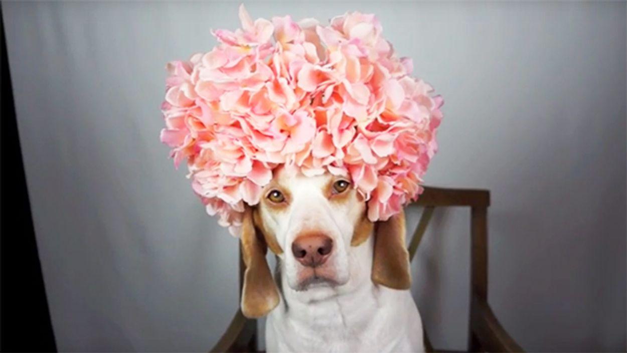 Afbeelding van Web Draait Door: Bloemenhoed
