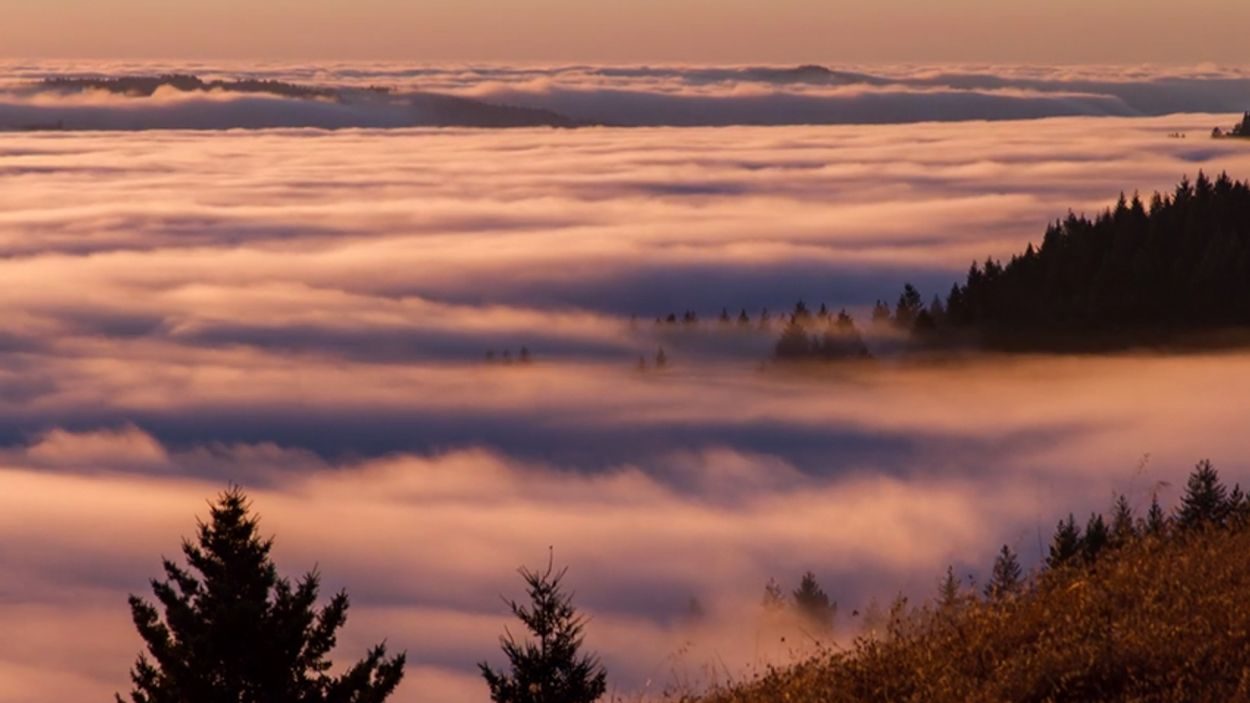 Afbeelding van Web Draait Door: Mooie mist