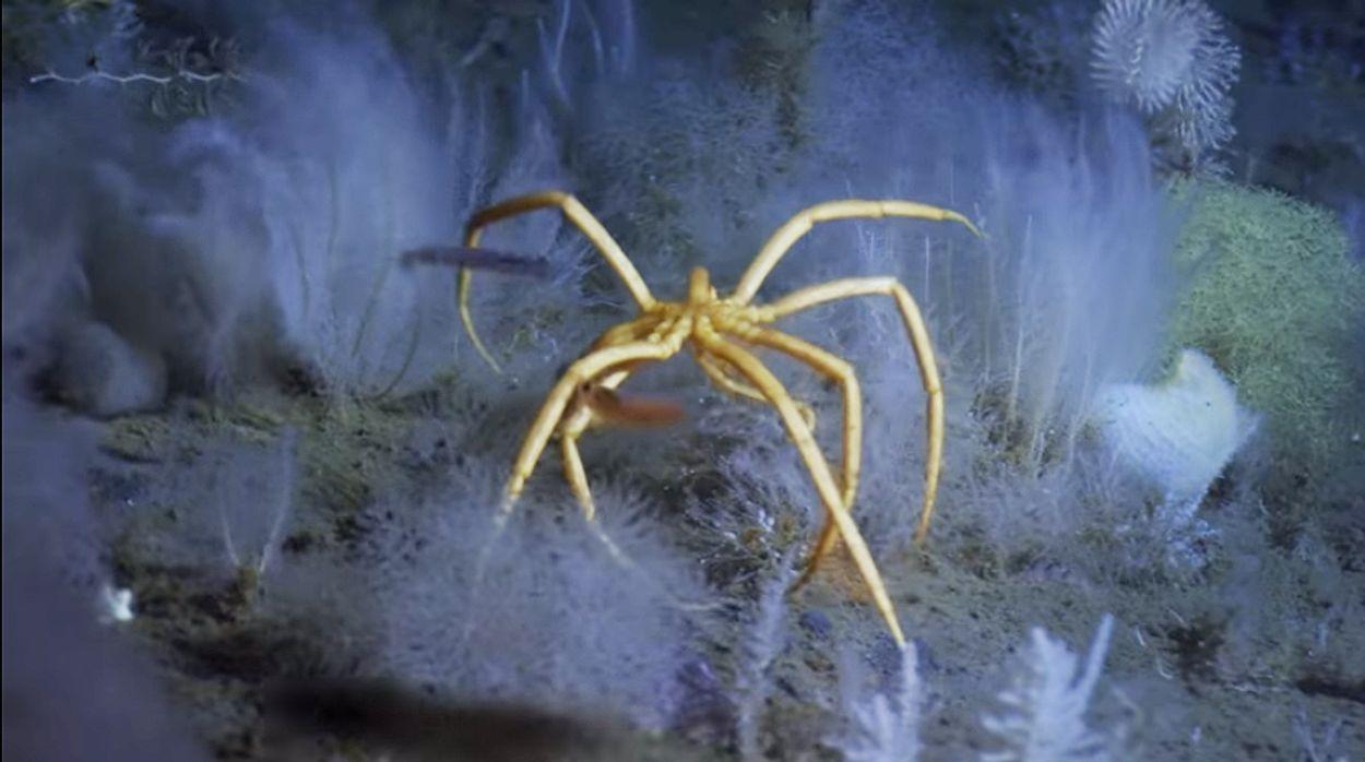 Afbeelding van Web Draait Door: 1000 meter onder het ijs.