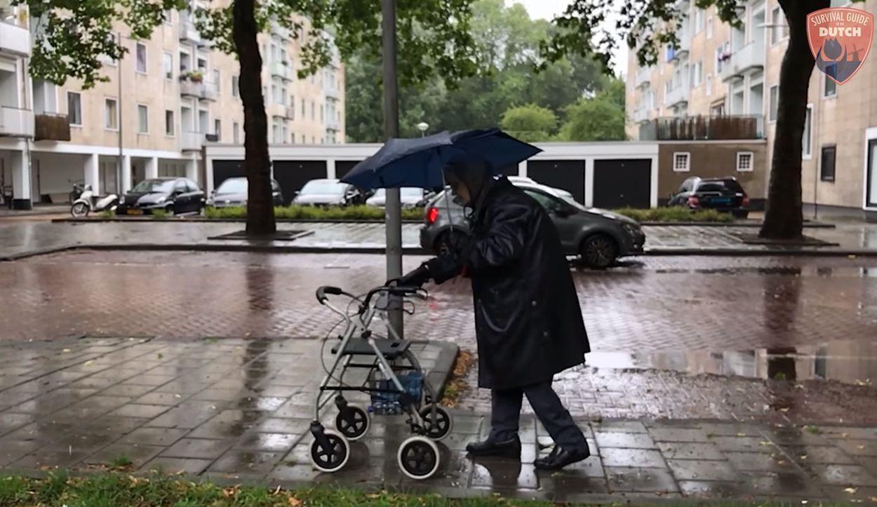 Afbeelding van Web Draait Door: Nederlands weer