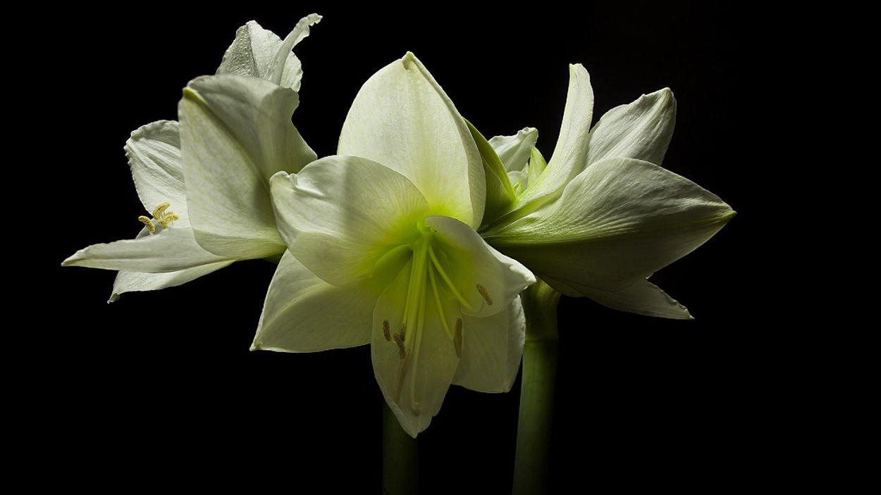 Afbeelding van Web Draait Door: de lente is hier