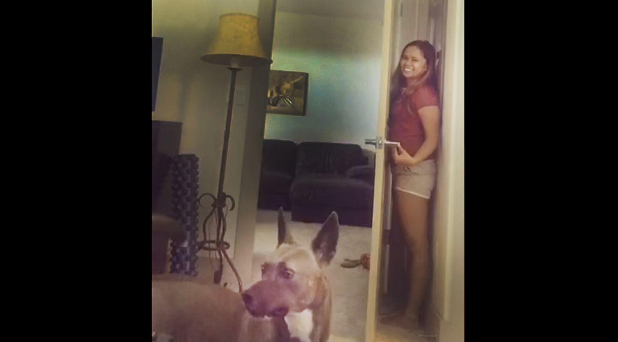 Afbeelding van Web Draait Door: fop de hond