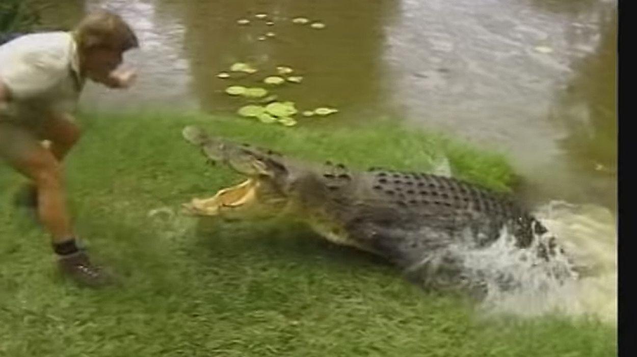 Afbeelding van Web Draait Door: Sterfdag Steve Irwin