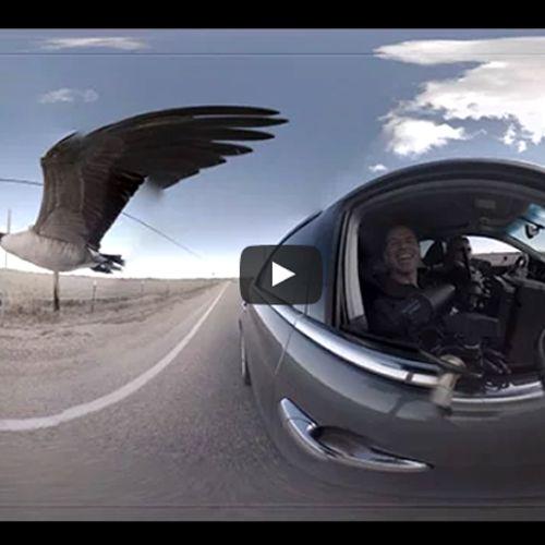 Afbeelding van Web Draait Door (360°): Smoorverliefde Gans
