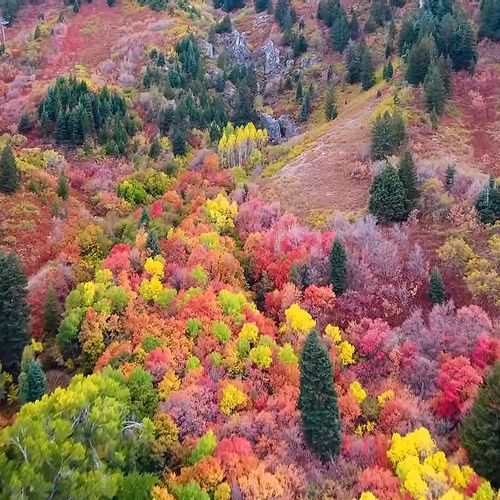 Afbeelding van Web Draait Door: herfstpracht in Utah